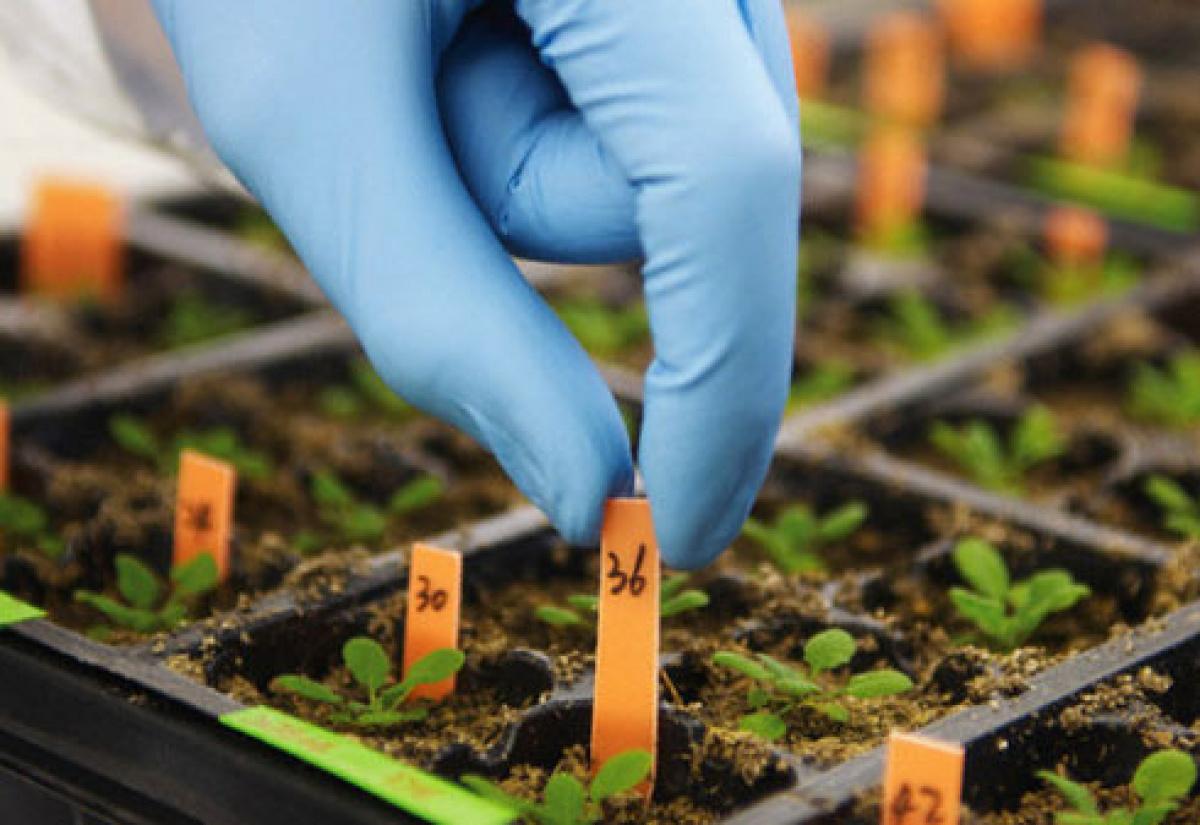 FutureCamp Europe: agricoltura e genetica